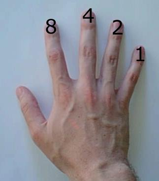 Base-2 computation on a human hand: finger values are 8, 4, 2, and 1